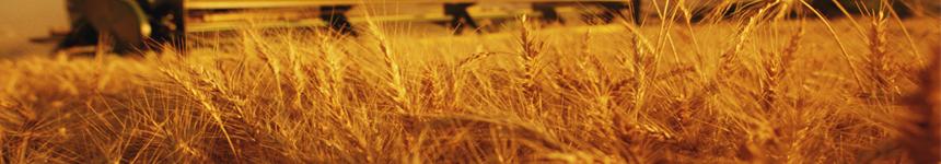 معرفی رشته مهندسی اقتصاد کشاورزی